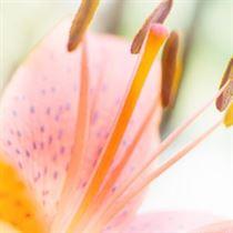 fleurs artificielle