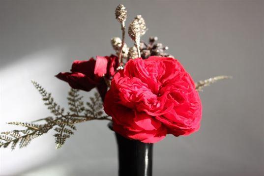 fleurs stabilisees